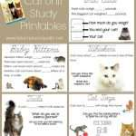 Cat Unit Study Activities Pack