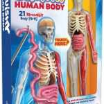 Squishy Human Body Toy Model