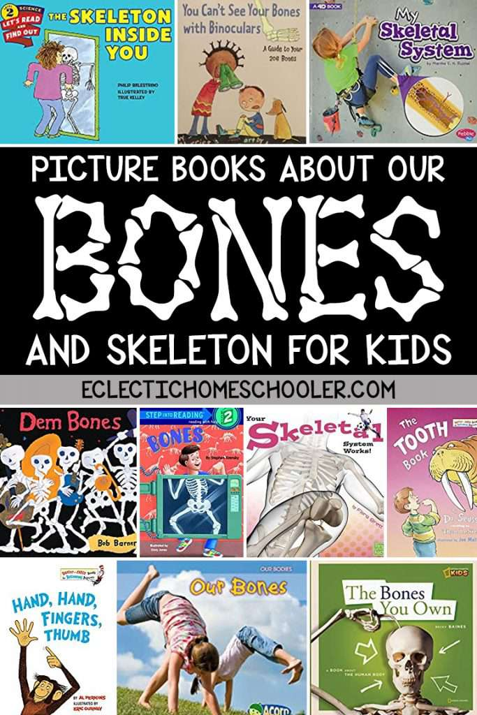 Picture Books About Our Bones and Skeleton for Kids